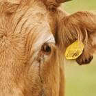 Franse film: La Vache van Mohamed Hamidi