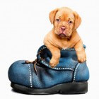Woezel en Pip: de liefste hondjes van de wereld