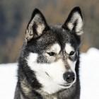 Hondenfilms voor jong en oud